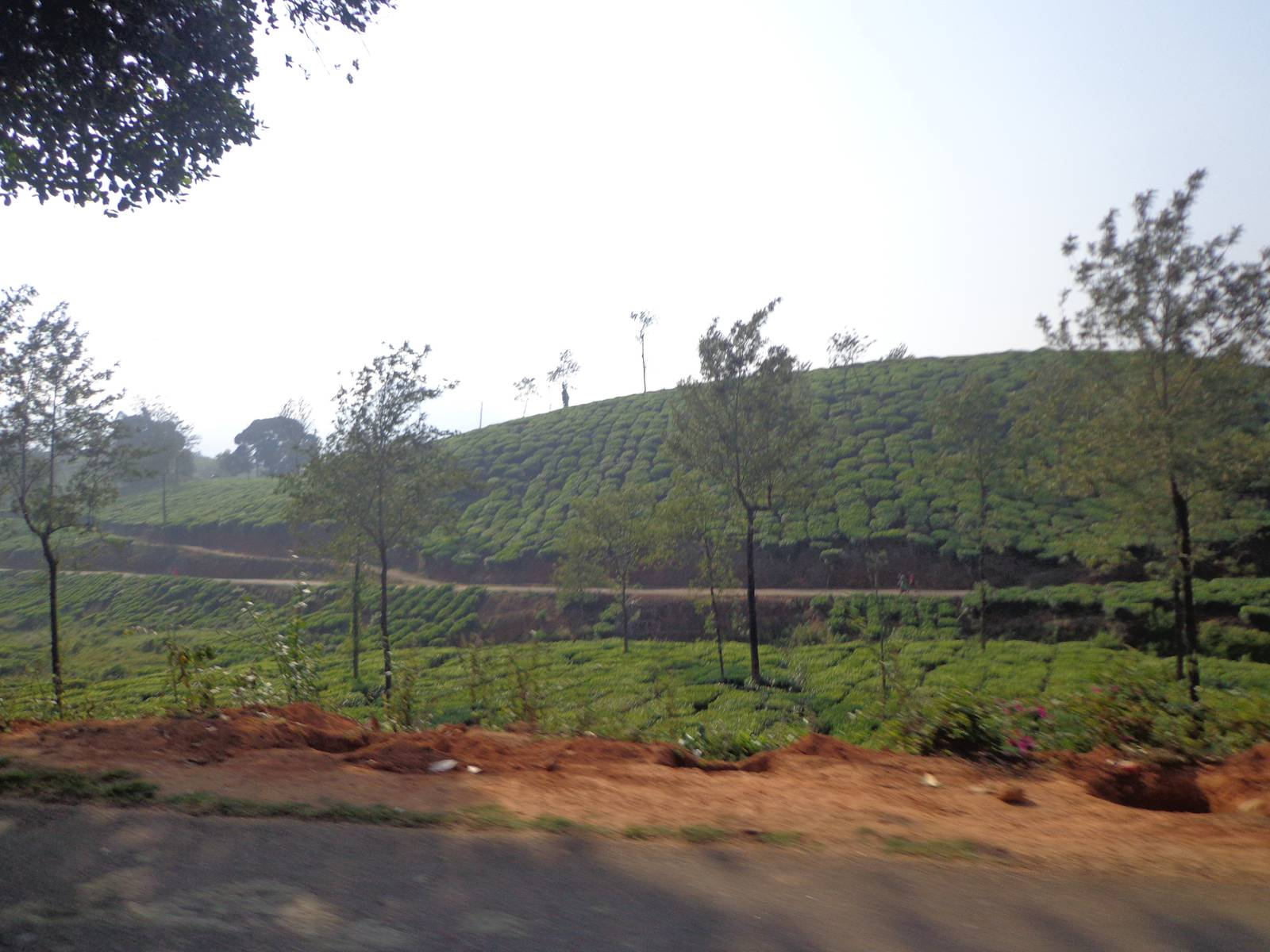 Most of the tea estates nearby were owned by Harrisons Malayalam Ltd.