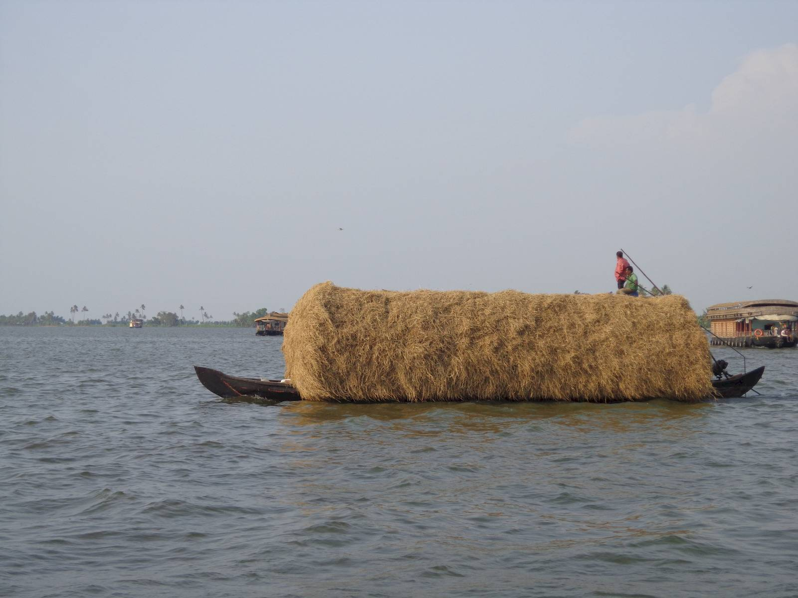 Locals transporting hay on canoe.