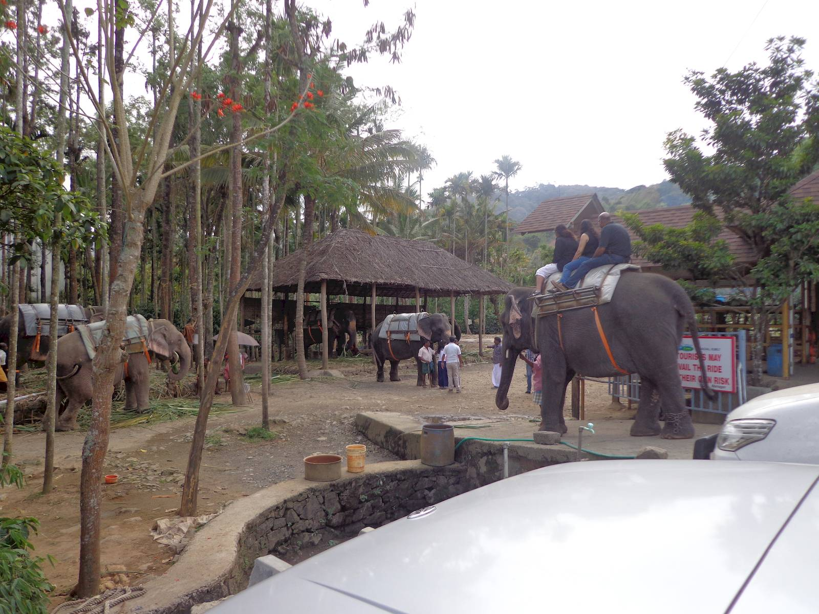 Elephant rides outside the Kalari / Kathakali centre.