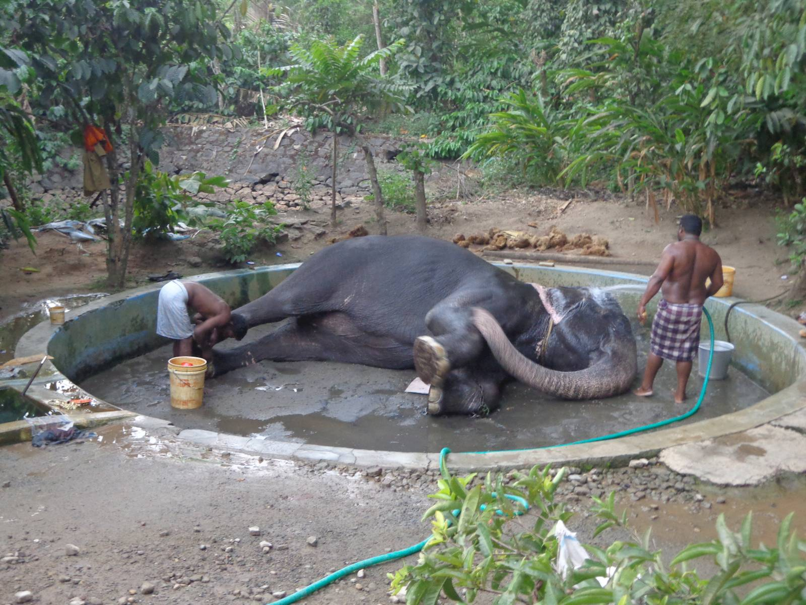 An elephant enjoying a nice bath.