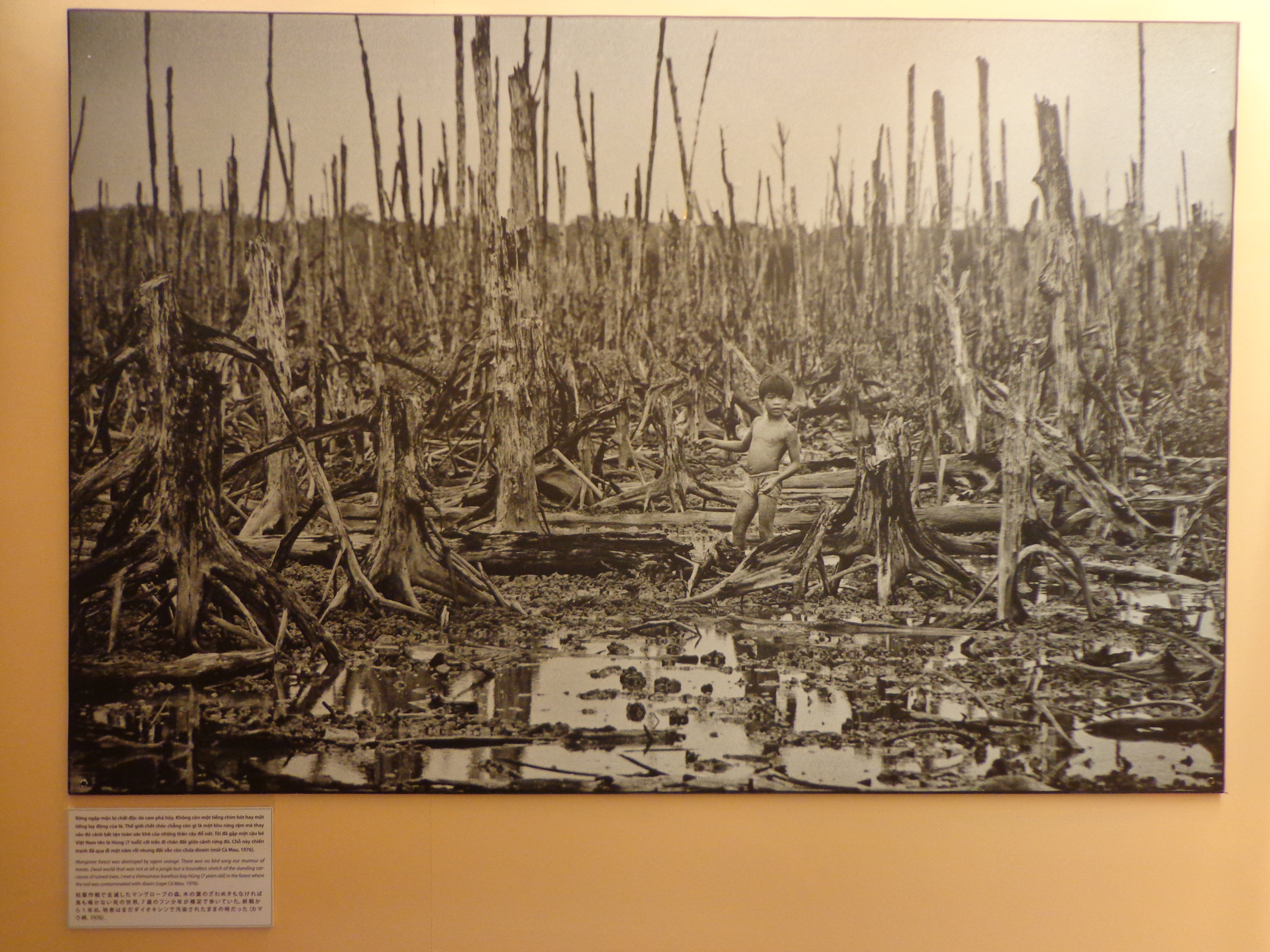 This photograph by Goro Nakamura shows the devastation of mangrove during Agent Orange.