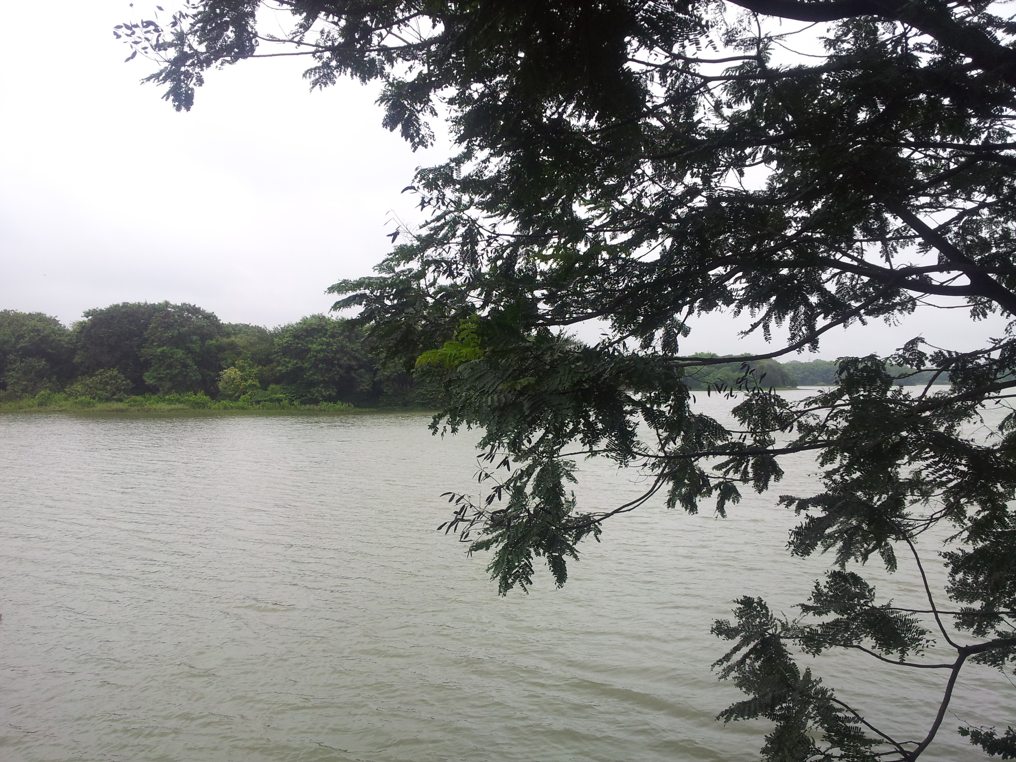 Hebbal Lake looked really nice in the rain.