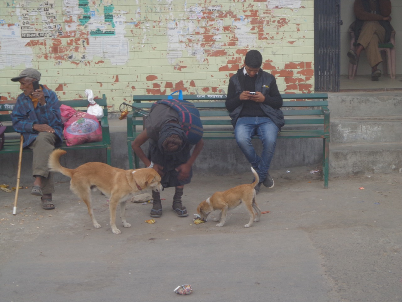 An ascetic feeding two dogs. I took this photo when the bus had stopped to let a large number of marriage attendees in.