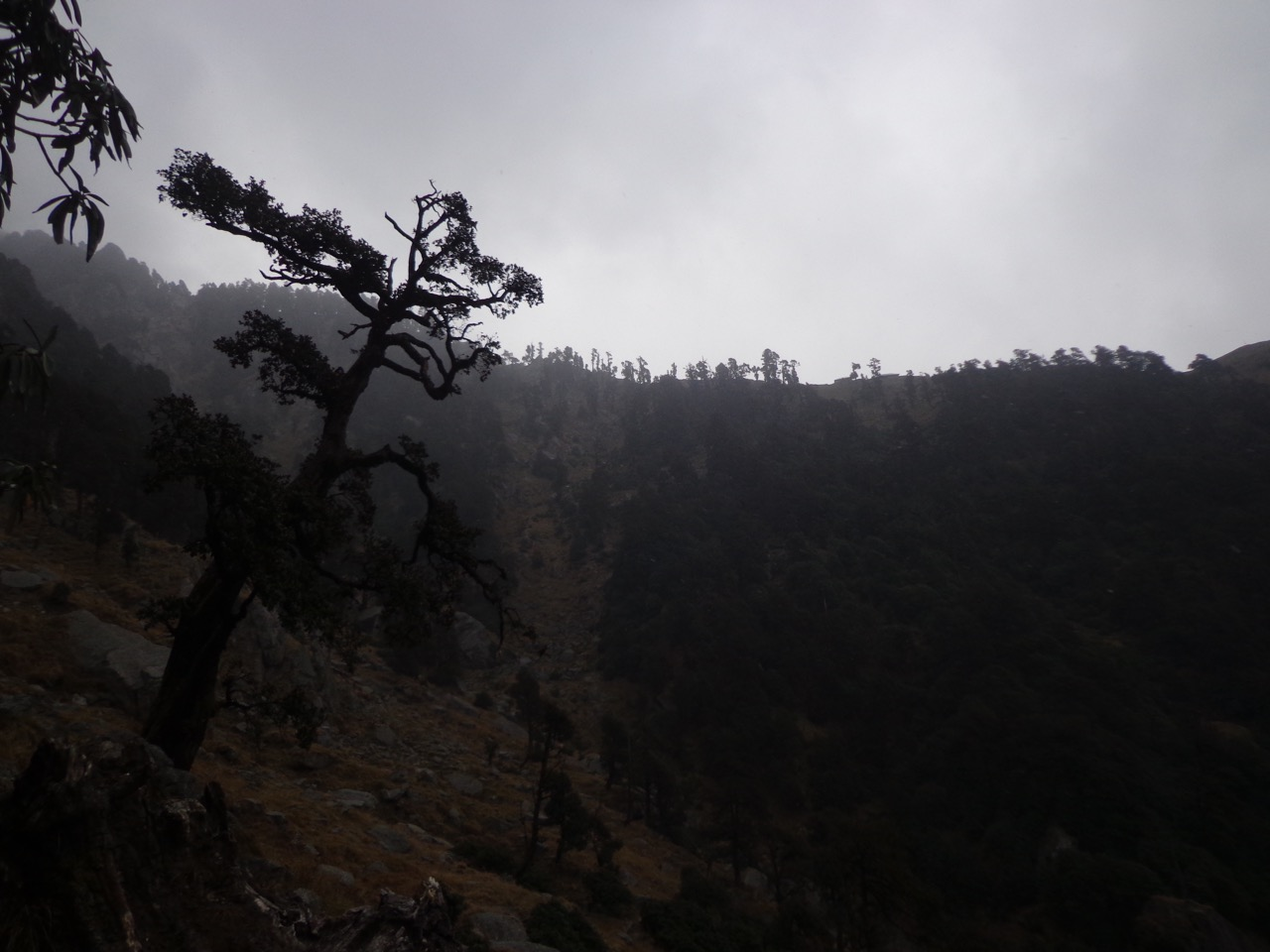 Triund was covered in clouds. It was drizzling but I was happy that I had escaped the snowstorm.