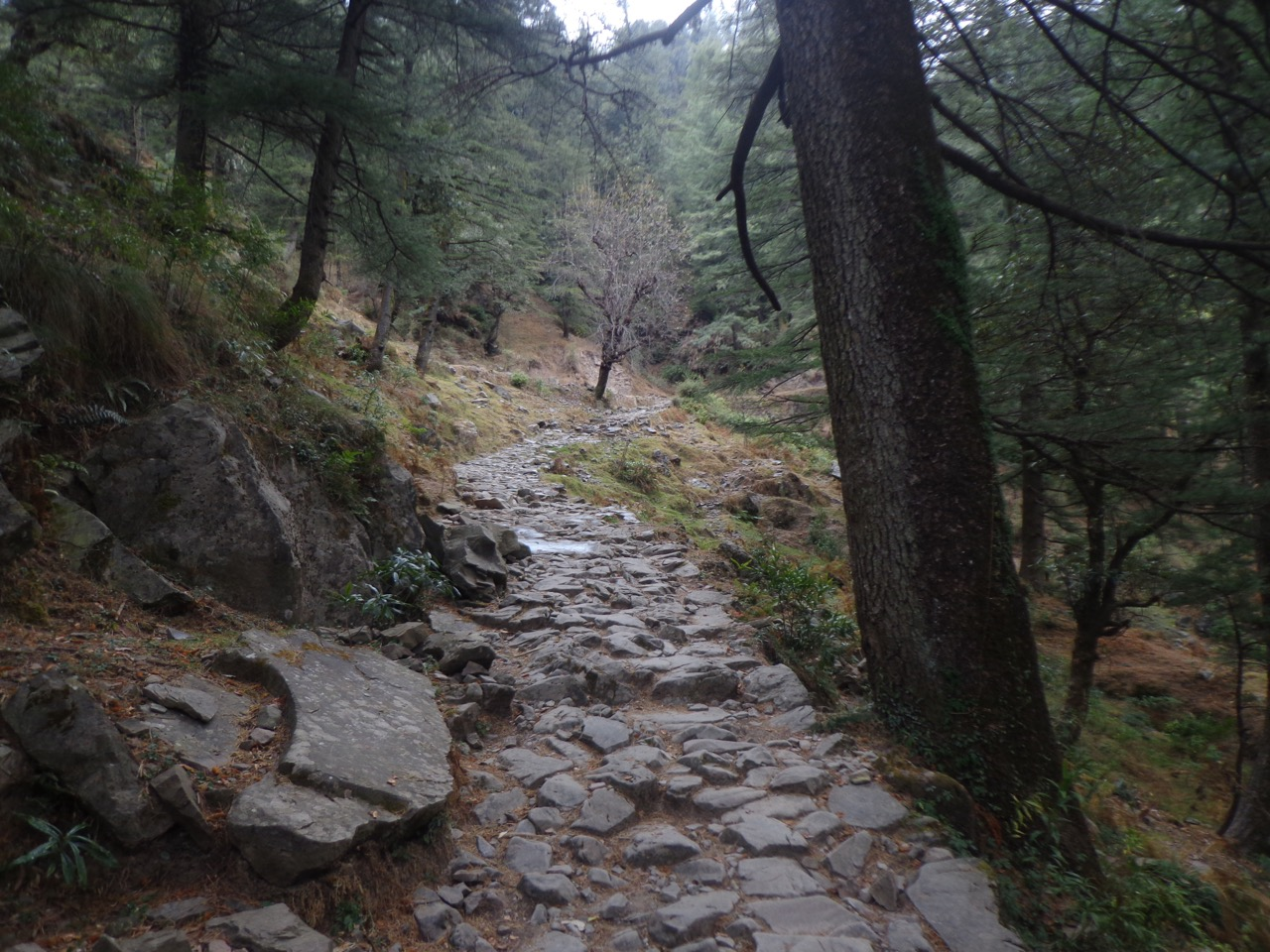 I took the walking trail from Galudevi to Dharamkot this time.
