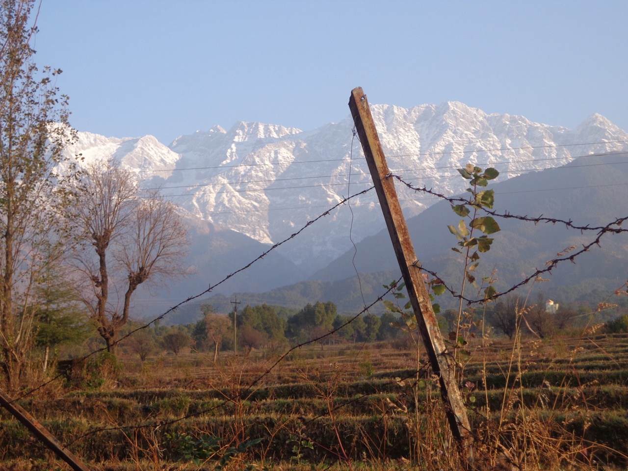 The Dhauladhar range looked brilliant in the clear, morning sky. Yes, I rewrote that sentence for this caption.