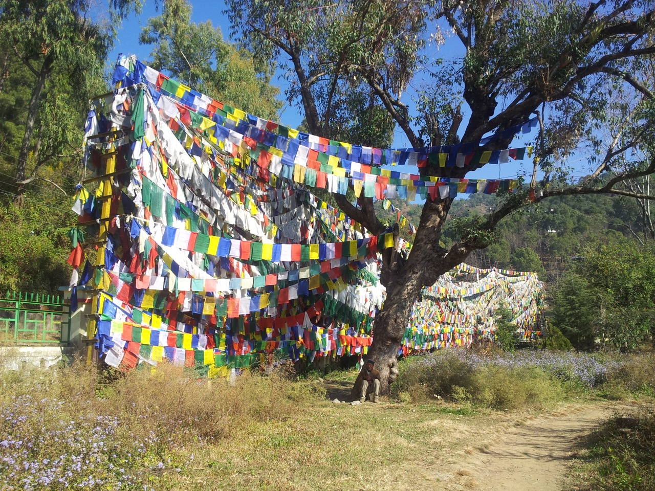 Prayer flags between trees create a wall.