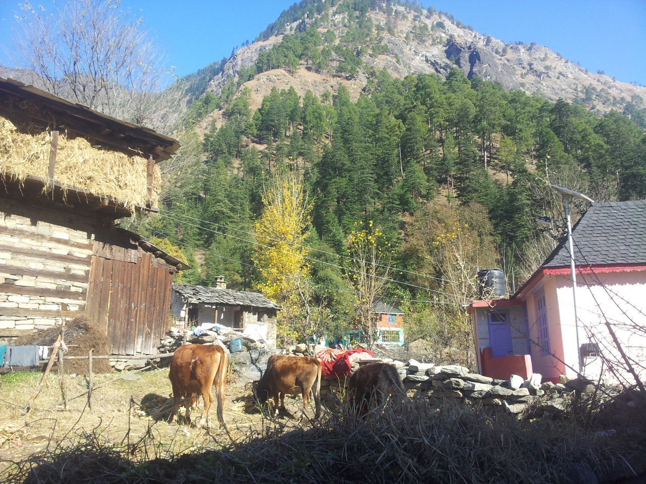 The trail passes right between the houses of Chhalal village. This is a cowshed located beside the trail.