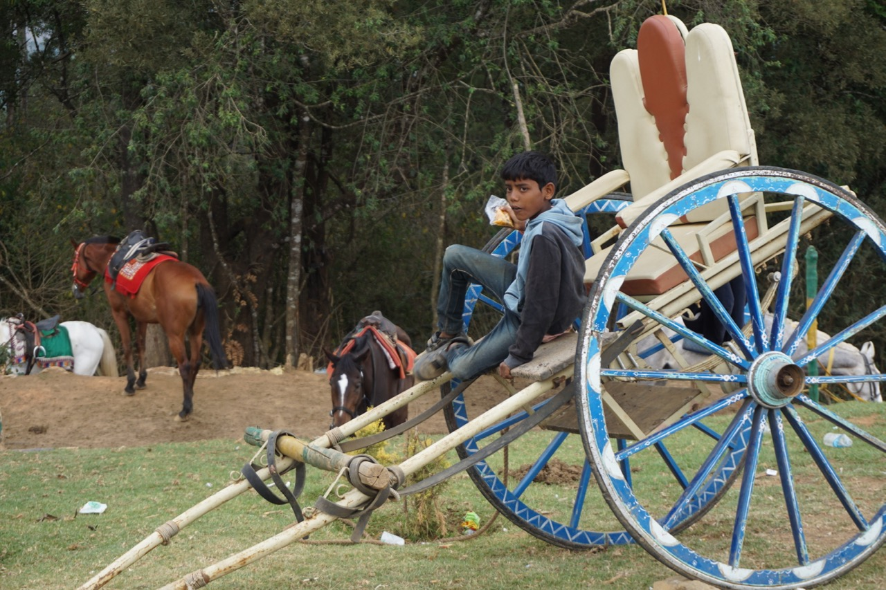 A kid enjoying some savouries on a horse cart.